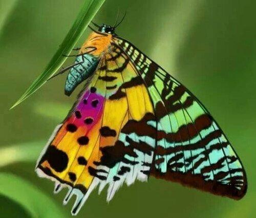 farfalla con le ali di tanti colori