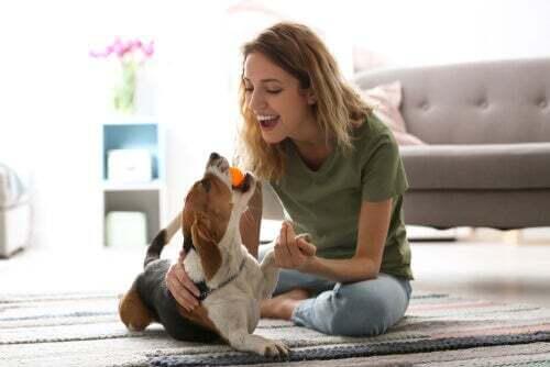 Giocare con il cane in quarantena