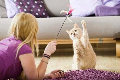Giochi da fare con gli animali domestici durante la quarantena