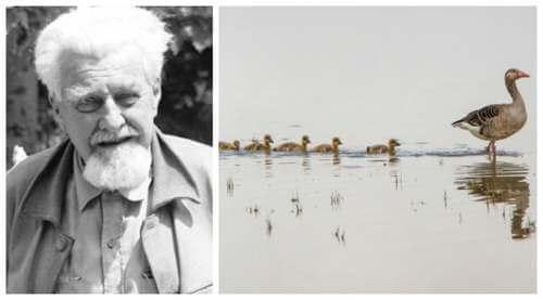 Konrad Lorenz e i modelli di comportamento animale