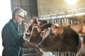 Il pericolo dell'MMS in ambito veterinario