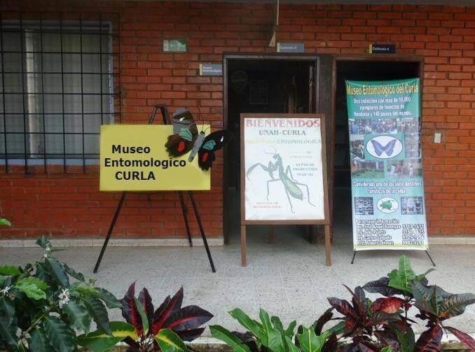 museo entomologico curla