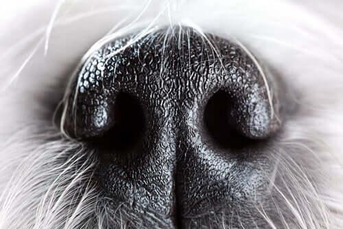 i cani sono tra gli animali che possiedono un olfatto molto sviluppato