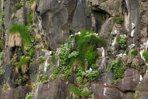 Di cosa si occupa un etologo e nidi di gabbiani