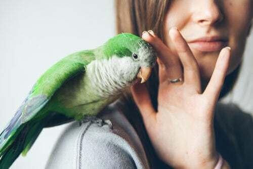 Pappagallo verde sulla spalla della padrona