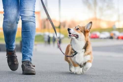 è possibile evitare le multe per chi porta il cane a passeggio, se si seguono alcune regole