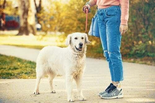 Donna che cammina il suo cane al guinzaglio