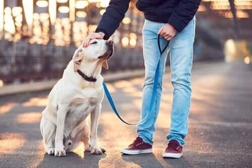 Pet sitting: 6 regole per badare al cane di un altro