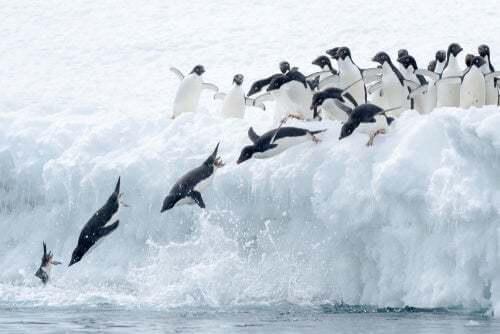La maratona dei pinguini di Fiordland