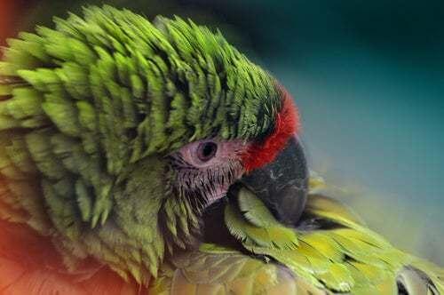 Osservare le piume degli uccelli per prevenire le malattie