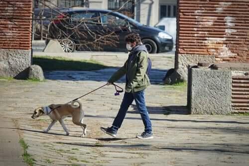 Coronavirus e multe per chi porta il cane a passeggio