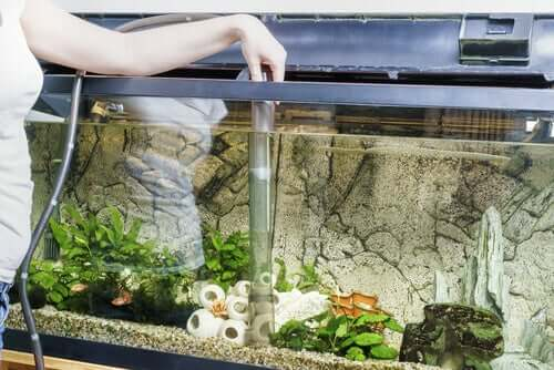Donna che sistema l'acquario per i pesci.
