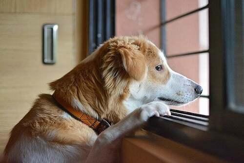 Salute mentale del cane