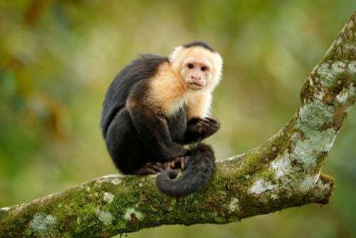 È etico addestrare le scimmie a scopi terapeutici?