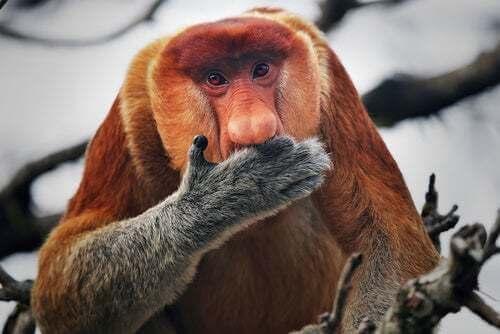 Scimmie primati