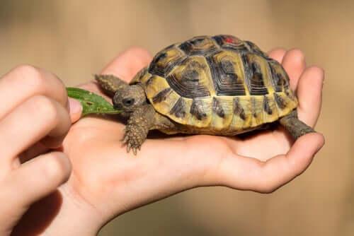 I 3 problemi di salute più comuni nelle tartarughe domestiche