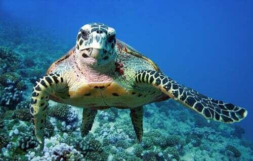 La tartaruga marina: tutto su uno degli animali più affascinanti