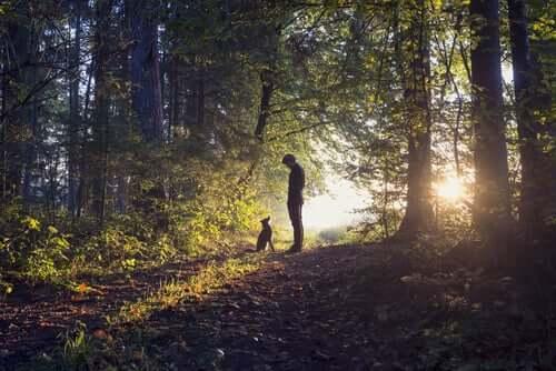 Persona e cane nel bosco