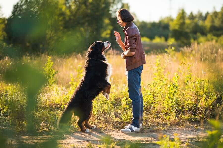 Uomo che addestra un cane