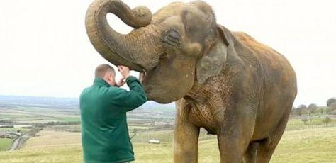 5 malattie virali degli elefanti