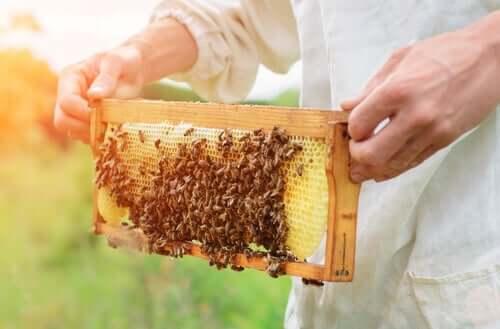 apicoltore con un favo