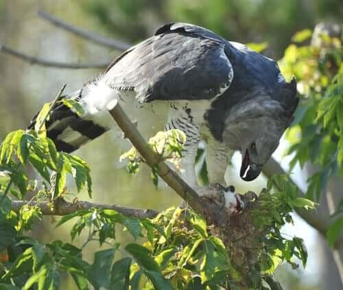 grande uccello appollaiato su un ramo