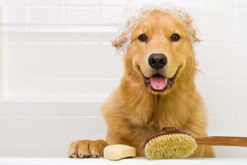 Bisogna lavare più spesso gli animali durante la quarantena?
