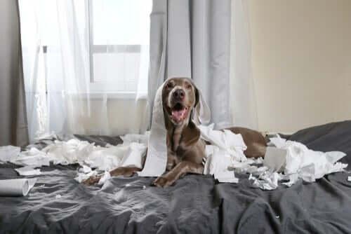 Cani iperattivi: consigli per affrontare la quarantena