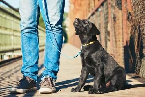 Educazione del cane per principianti: 5 passaggi