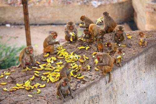 Clan di scimmie