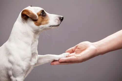 Educazione dei cani per principianti comando zampa