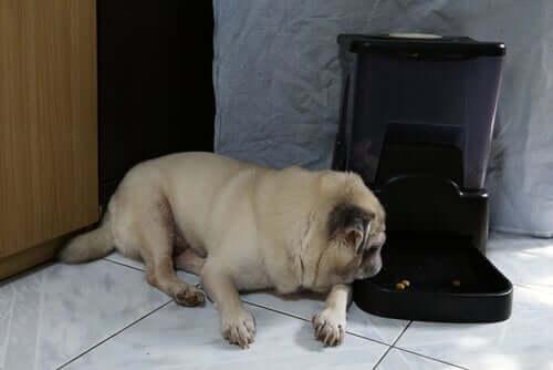 distributori automatici di cibo per cani