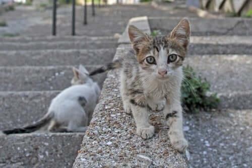 Coronavirus: multa a chi dà da mangiare ai gatti randagi?