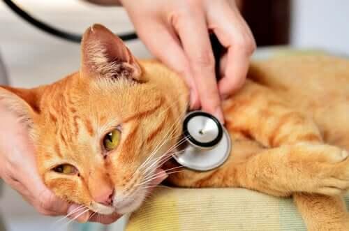 portare il proprio animale dal medico è consentito, quando ci si trova di fronte a urgenze veterinarie