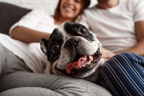 Umanizzare il cane: ecco perché non bisogna farlo