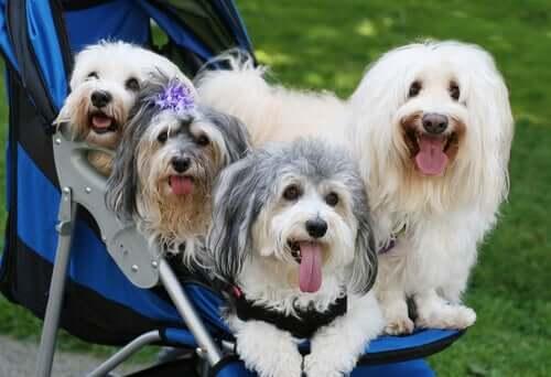 cani su un passeggino