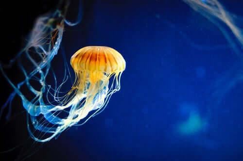 Le meduse: riproduzione e alimentazione
