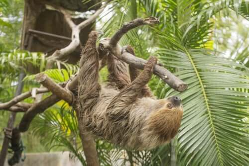 animale su un tronco di albero