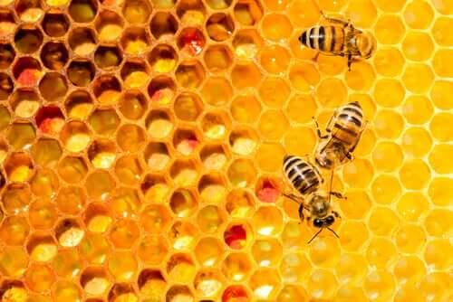 api in un'arnia: un nuovo medicinale per le api potrebbe proteggerle dalla peste americana