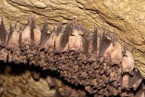 Pipistrelli in una grotta