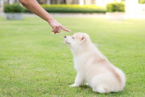 Punire i cani iperattivi