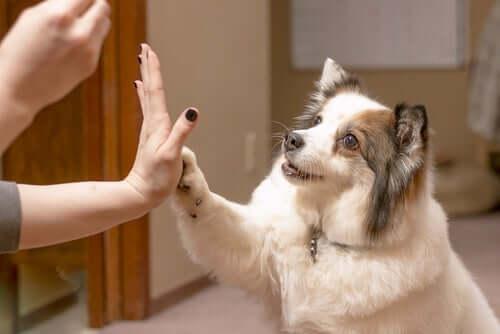 Ricompensa ed educazione del cane per principianti