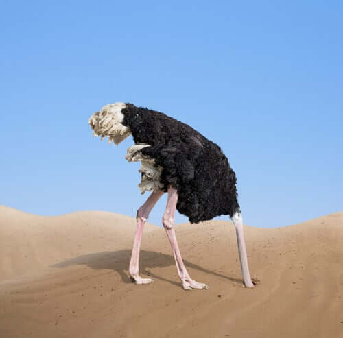 Struzzo con la testa sotto la sabbia