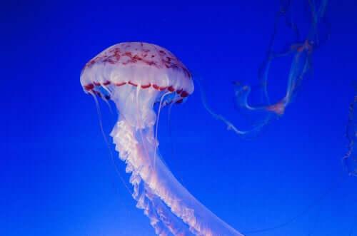 I tentacoli delle meduse