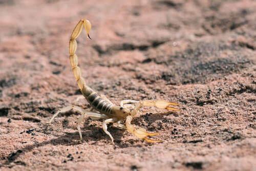 A cosa serve il veleno dello scorpione?
