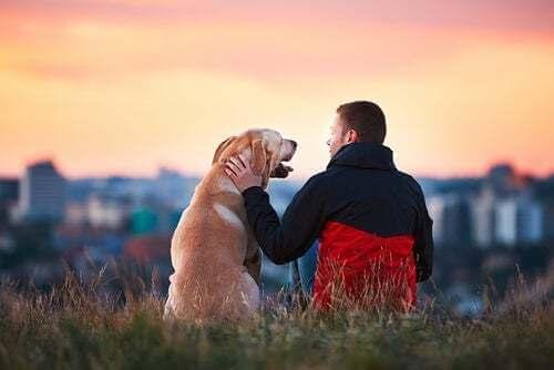 3 storie commoventi di animali fedeli