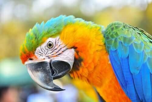 Scopriamo l'ara, un uccello incredibilmente intelligente