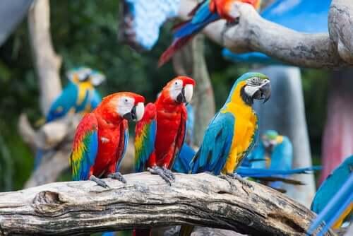 gruppo di pappagalli rossi e gialli