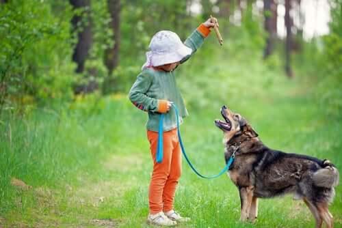 Bambino e cane che giocano con un legnetto
