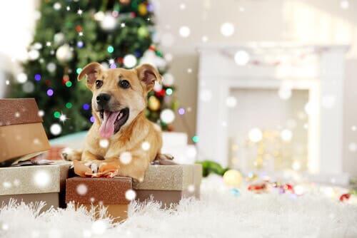 Regalare un animale domestico per Natale: cane tra i regali.